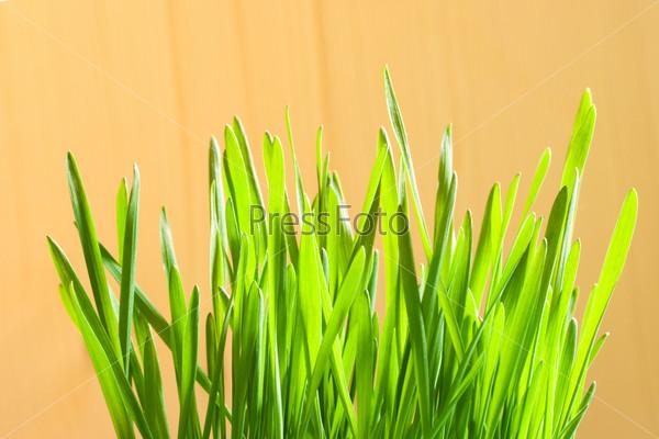Зеленые первые посевы крупным планом