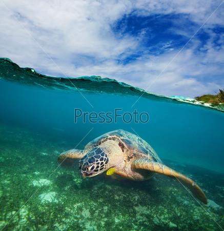 Черепаха плавает на дне моря
