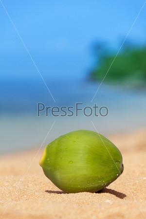 Неспелый кокос на пляже