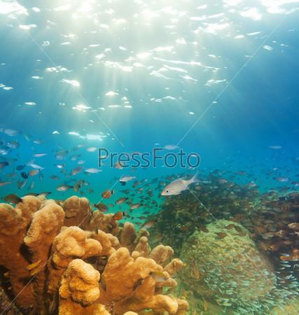 Фотография на тему Захватывающая подводная панорама