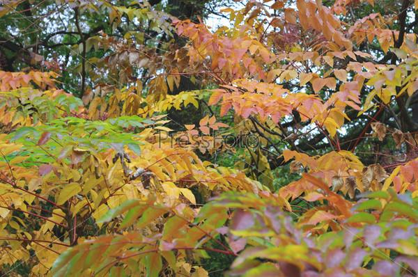 Крупные пестрые листья