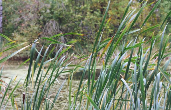Фотография на тему Осенний пейзаж
