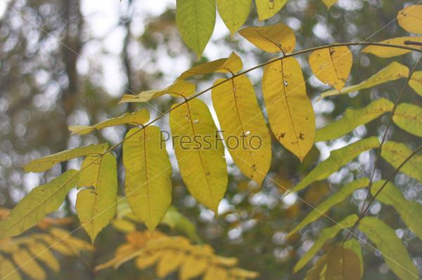 Фотография на тему Желтые листья