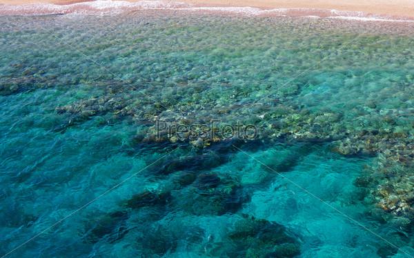 Кораллы в воде