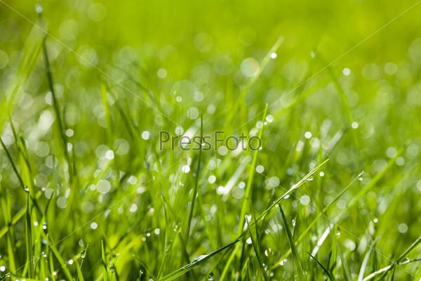 Фотография на тему Красивая трава, фон