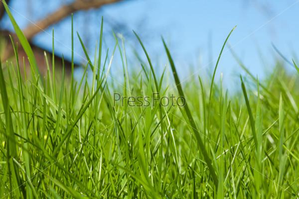 Высокая трава на дворе