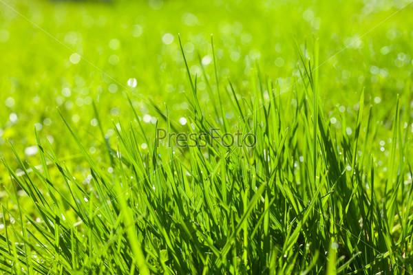 Фон из свежей весенней травы