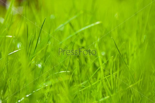 Весенняя зеленая трава крупным планом