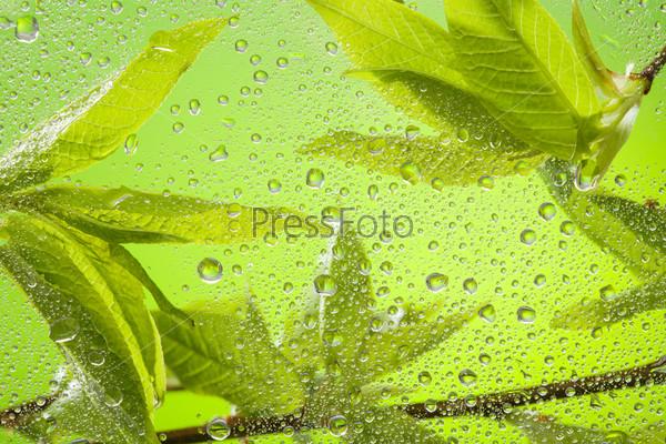 Веточка с листьями после дождя крупным планом