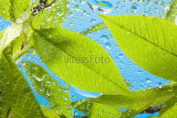 Мокрые листья крупным планом