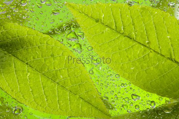 Фотография на тему Листья после дождя
