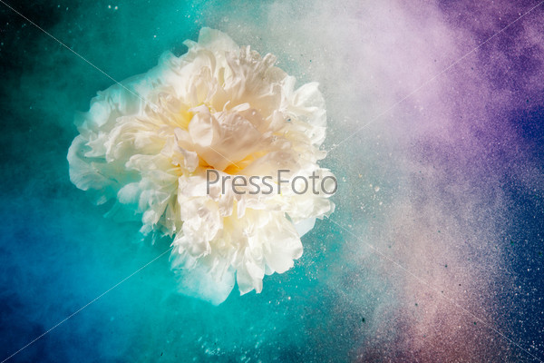 Вселенная как цветы