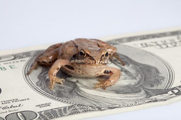 Лягушка сидит на долларе