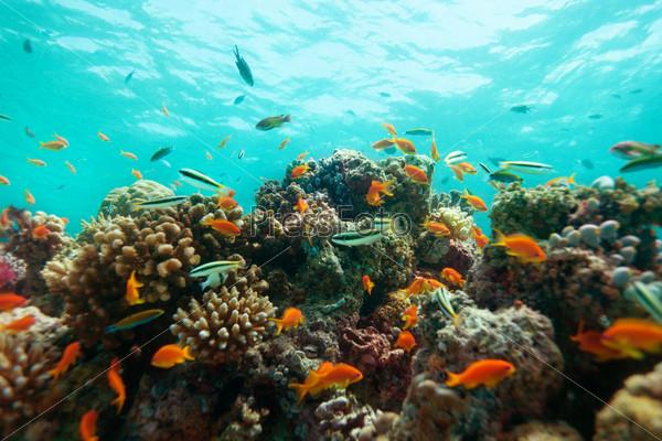 Кораллы и рыбы крупным планом