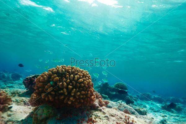 Фотография на тему Маленькие синие рыбы и кораллы
