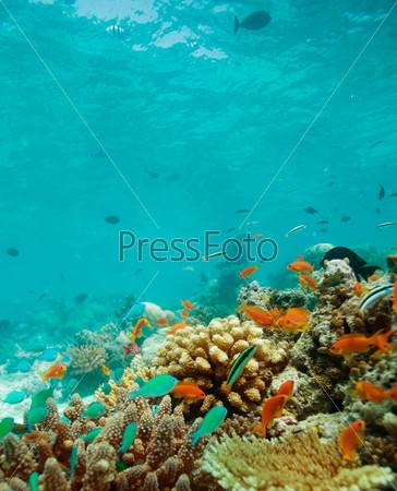 Колония рыб на рифе
