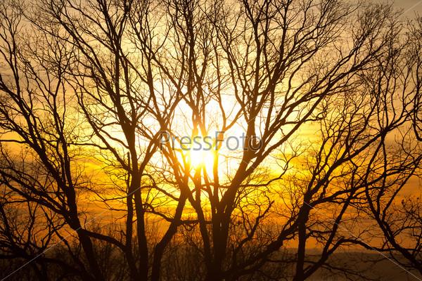 Закат сквозь деревья