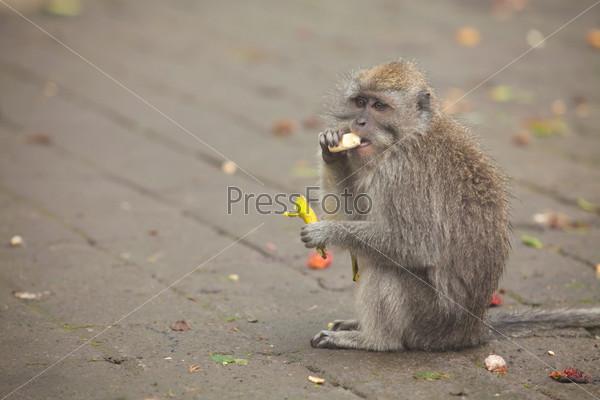 Фотография на тему Банановая обезьяна