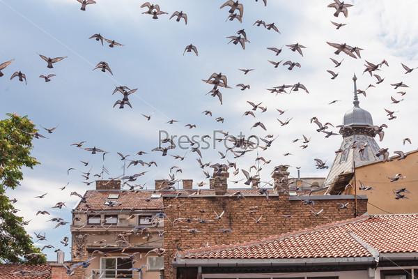 Птиц, летающие над крышами
