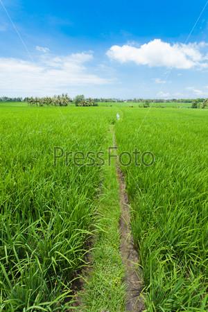 Заливные рисовые поля
