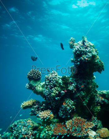 Подводный коралл