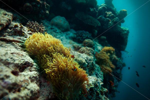Анемон на глубине