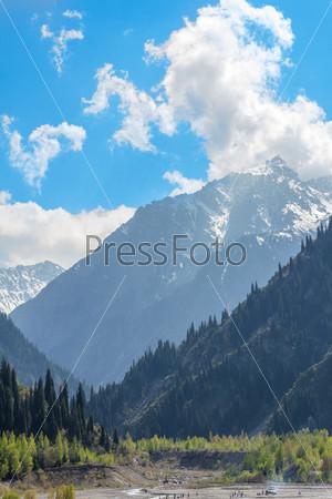 Зеленый хвойный лес в горах и голубое небо в Алматы, Казахстан
