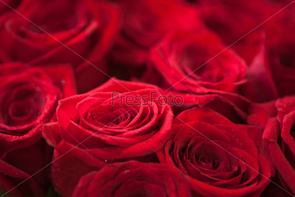 Фотография на тему Красные розы