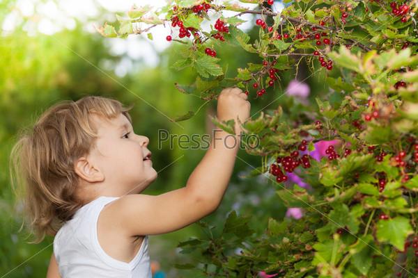 Фотография на тему Солнечный день в саду