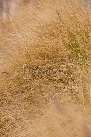 Крупный план желтой травы