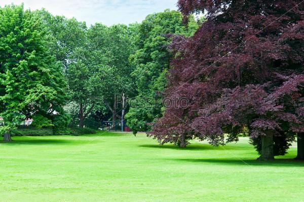 Красивый луг в парке