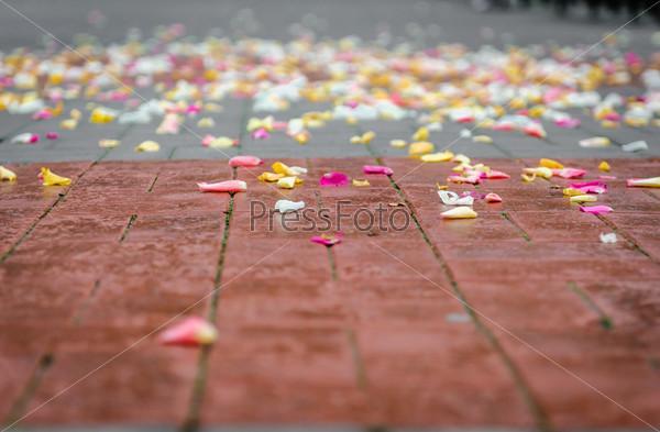 Лепестки роз на асфальте после свадебной церемонии