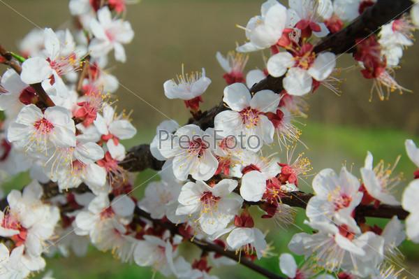 Фотография на тему Белые цветы