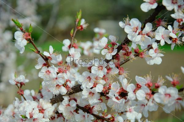 Фотография на тему Весна пришла