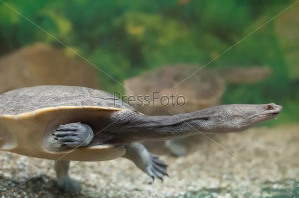 Черепаха в аквариуме