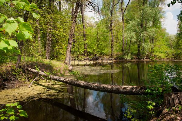 Фотография на тему Мостик из дерева через озеро