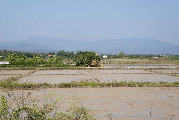 Фотография на тему Рисовые поля