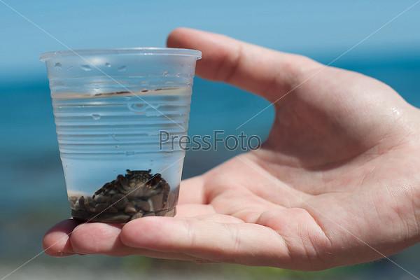 Фотография на тему Краб в стакане
