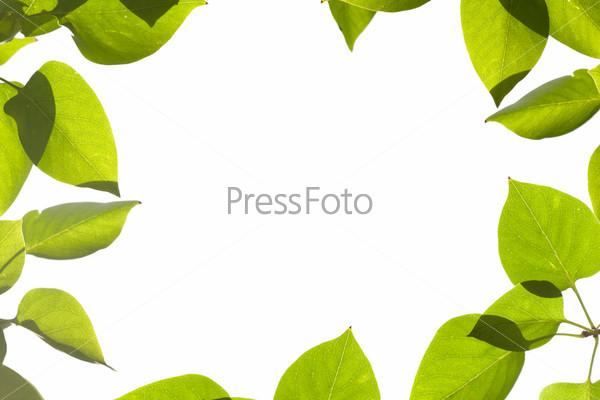 Фотография на тему Зеленые листья, рамка
