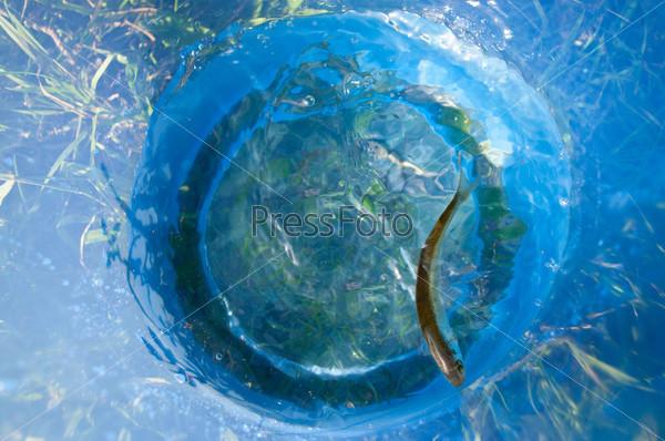 Рыбка в синем ведре