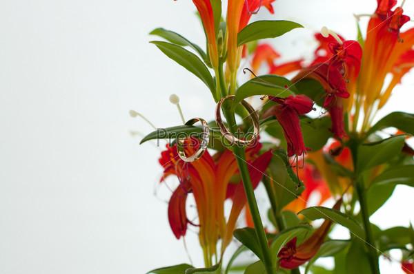 Свадебные кольца в букете цветов