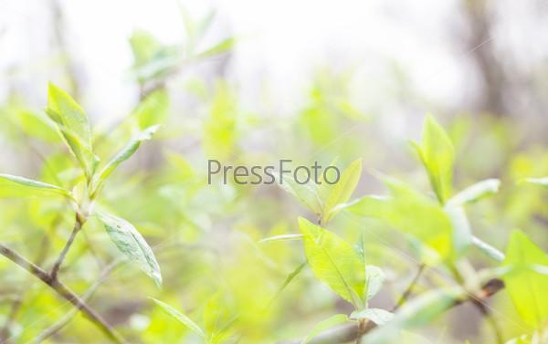 Зелень листьев
