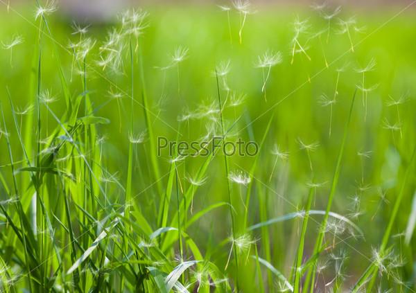 Фотография на тему Зеленая трава
