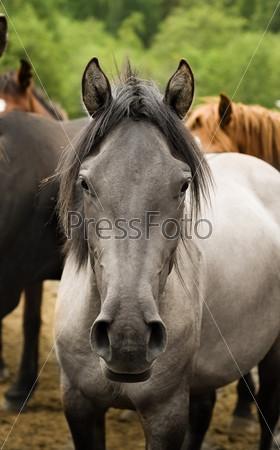 Стадо лошадей