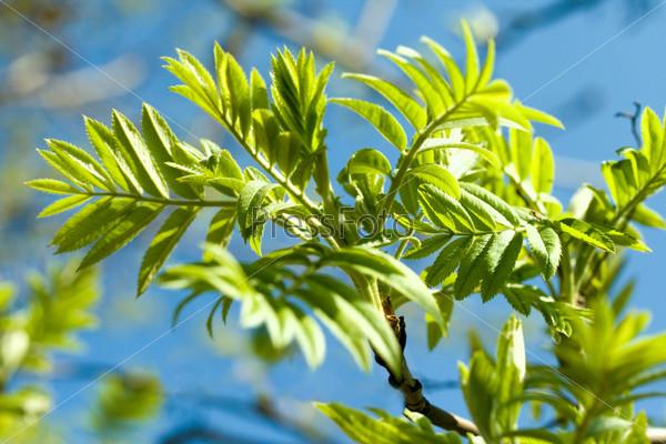 Ветка с зелеными свежими листьями и небо