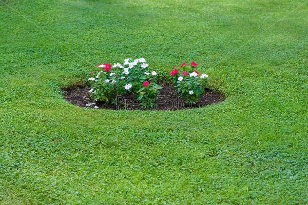 Клумба с красными и белыми цветами на зеленом газоне