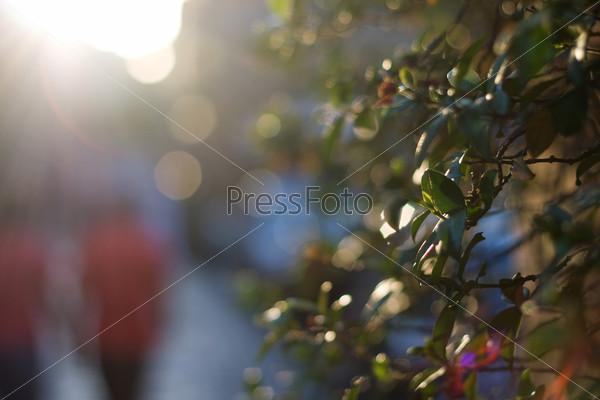 Дерево на фоне размытого городского пейзажа