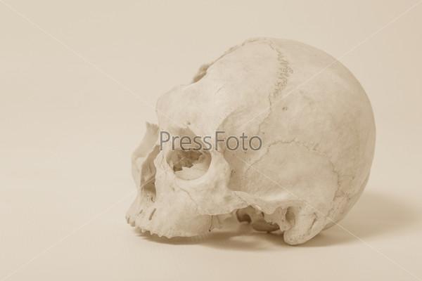 Человеческий череп, вид сбоку
