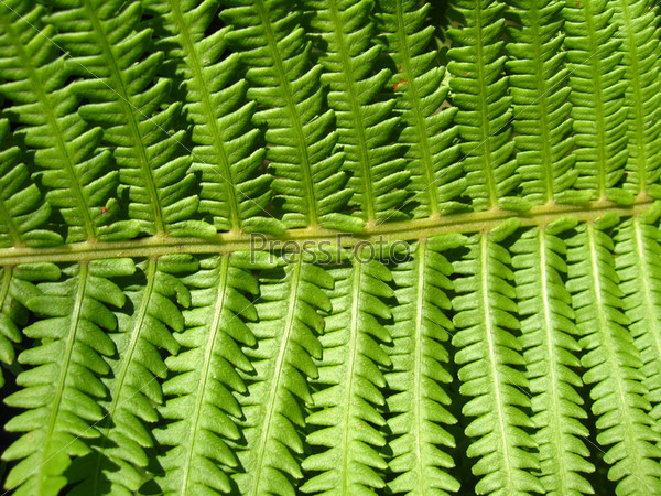 Ветка зеленого растения в качестве фона