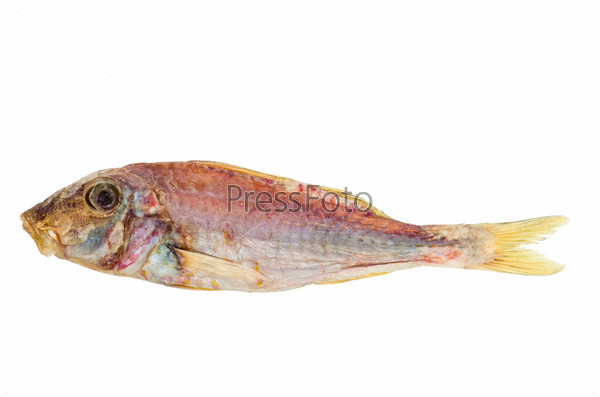 Salted and dried red mullet fish for Red mullet fish